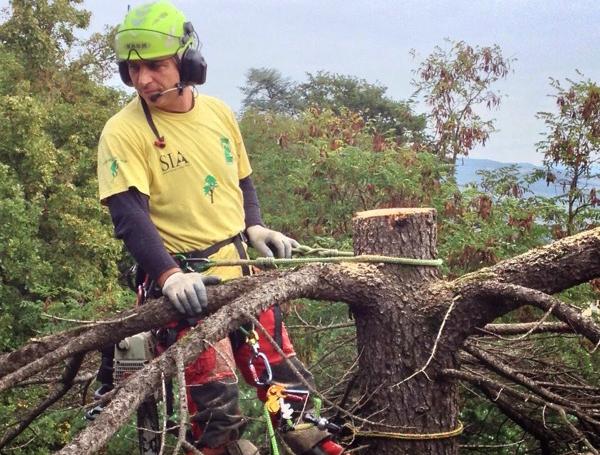 Treeclimber | Potatura abbattimento e consolidamento alberi, manutenzione giardini, servizio fresa ceppi | Bologna, Modena, Ferrara